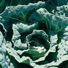 Image of morris heading collards