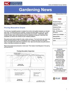 Cover photo for February/March Gardening Newsletter
